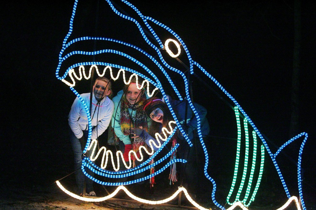 The Festival of Lights on James Island. Photo by Wade Spees/The Post and Courier